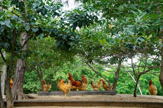 健康营养无残留 亲子之选鸡蛋全面上市